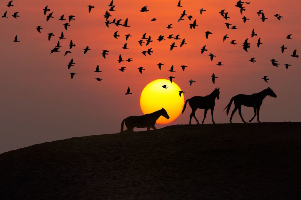 horses and sunset, hot to take stunning sunsets, dragonfly tour