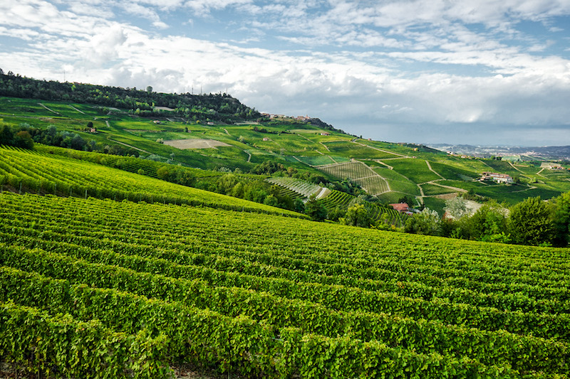 images of italy, dragonfly tours, piedmont, barolo, italian wine