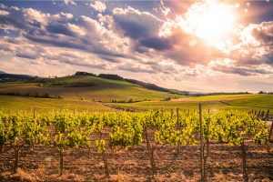wine country italy